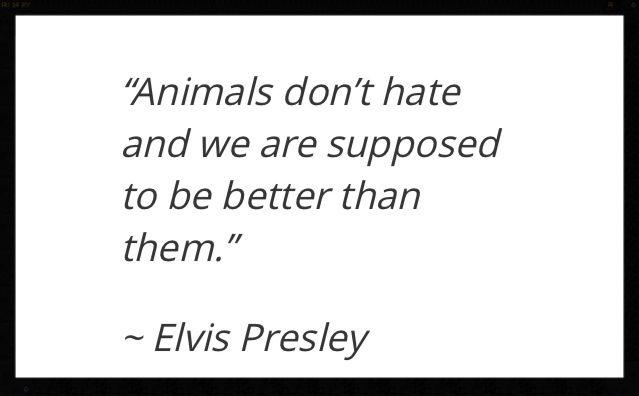 Elvis Presley Quote Elvis Quotes Elvis Presley Quotes Elvis