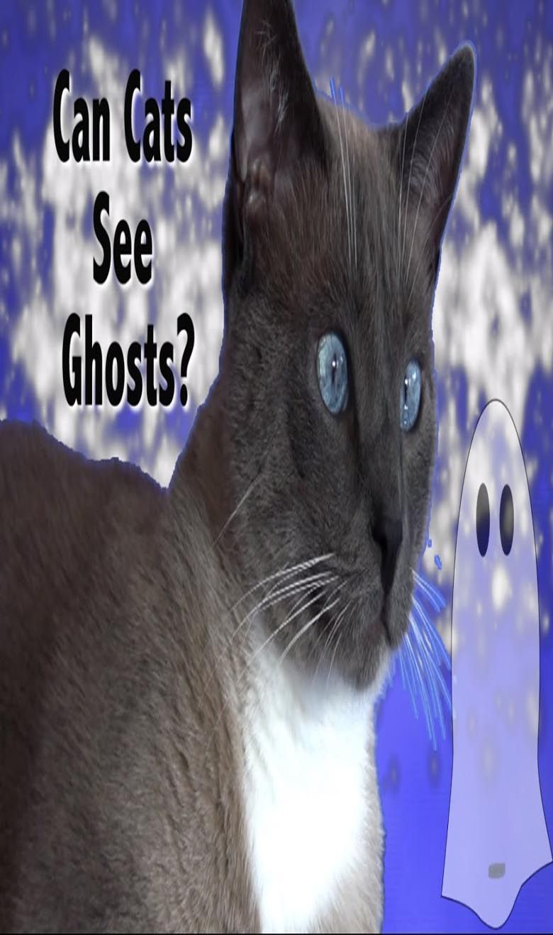 Can Cats See Ghosts or Angels (With images) Can cats see