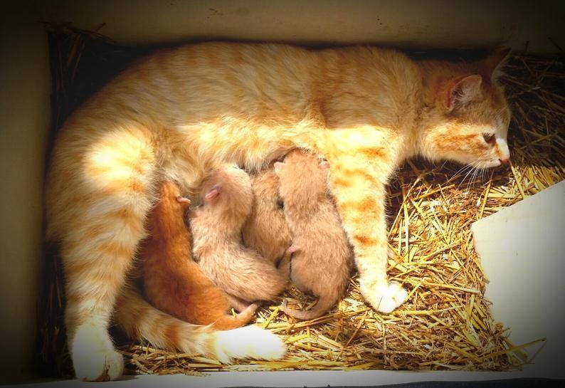 Outdoor Indoor Cat Shelter Cabin Safe House Etsy Cat Shelter Indoor Cat Outdoor Cat Shelter