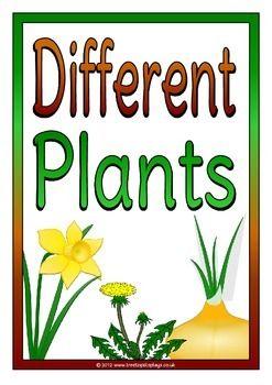 Different Plants Plants Kindergarten Different Plants Plants Unit