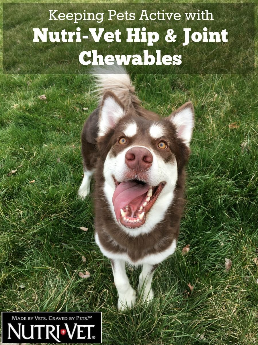 Keeping Pets Active with NutriVet Hip & Joint Chewables