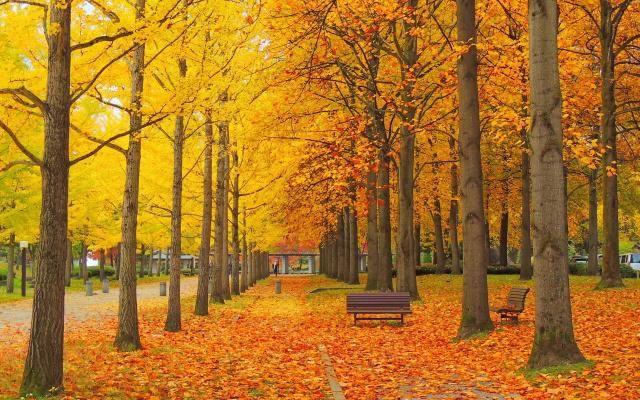 季節を楽しむ秋のフラワーアレンジメント!ハロウィン雑貨を使った飾り付けデザイン - Latte
