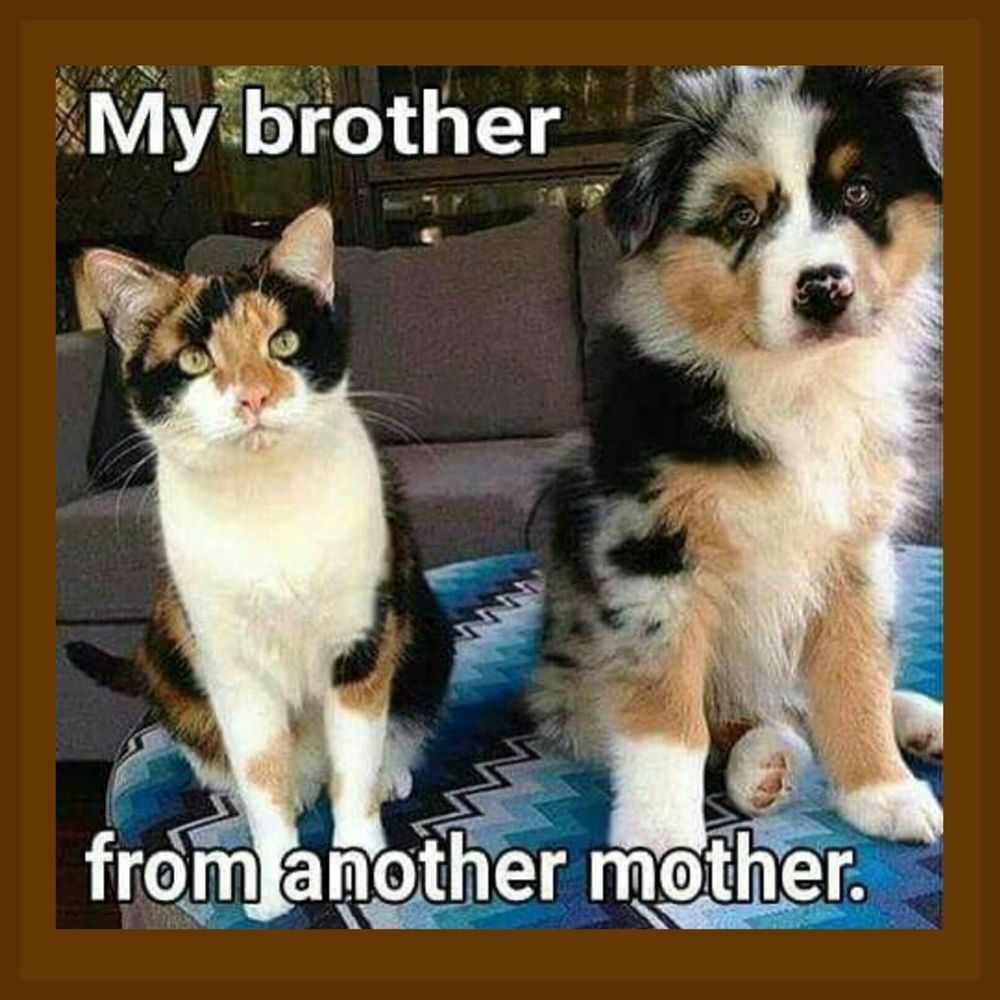 My Brother From Another Mother Dog Cat Meme 4 X4 Flexible