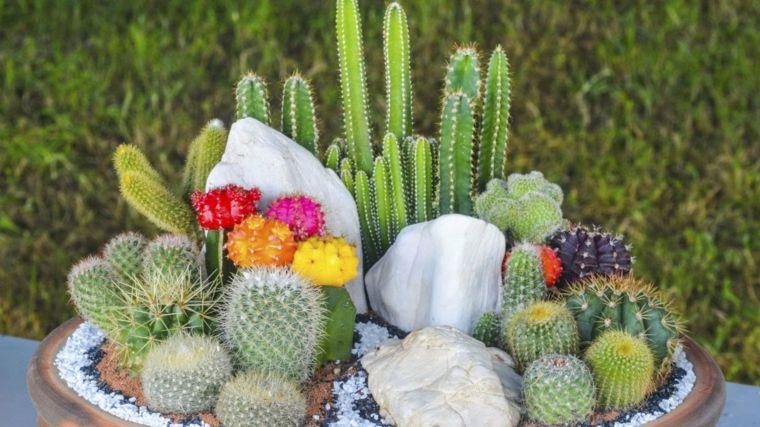 mini jardines con cactus y flores