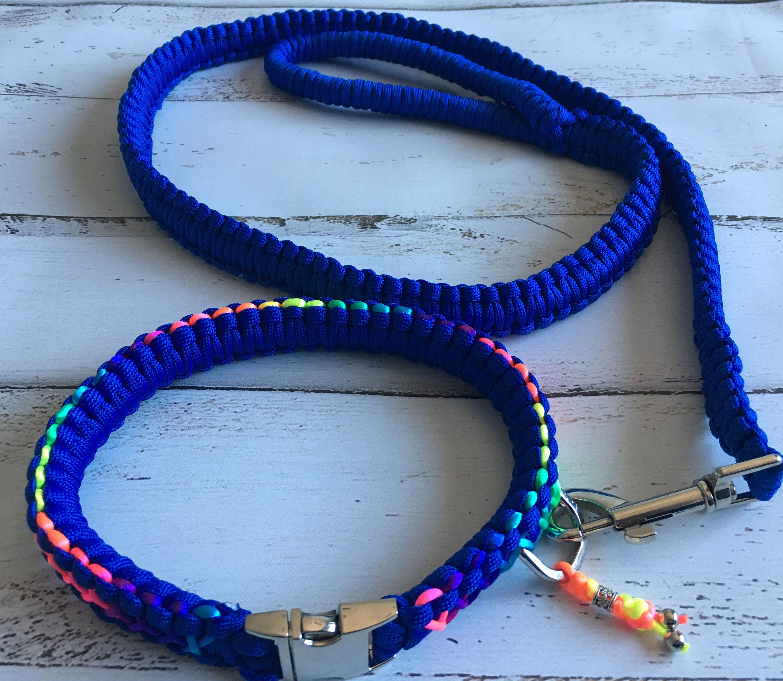 Blue and Yellow King Cobra collar