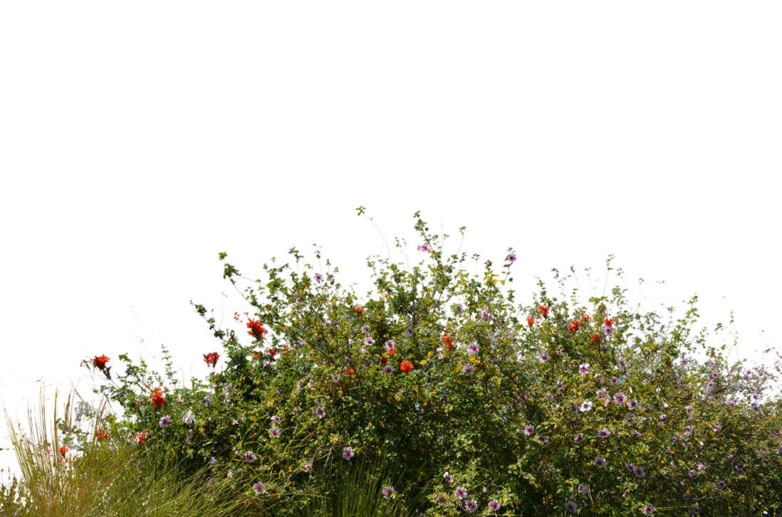 Wild Flowers With Grass 2 Stock Photo- 0081-PNG by annamae22