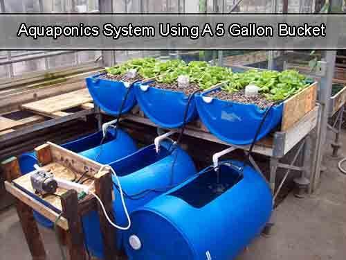 Aquaponics System Using A 5 Gallon Bucket