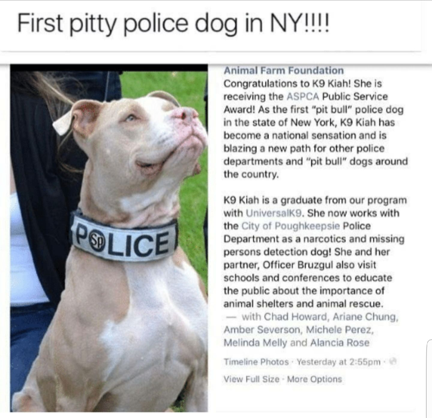 Proud Moment For Pitbull Lovershttps I Imgur Com Uvpg7o8 Jpg