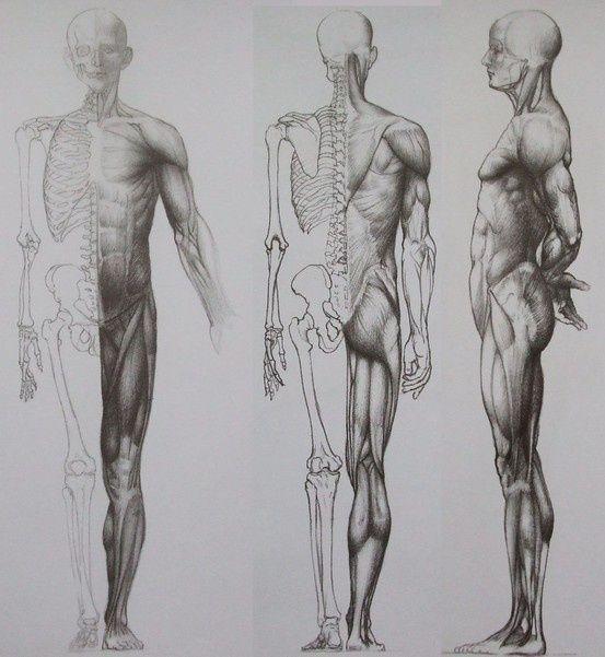 Jeno Barcsay Anatomy For The Artist 1958 Art Anatomy