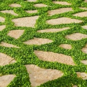 Le dichondra rampant dichondra repens est une plante vivace rampante utilis e comme couvre sol - Couvre sol jardin japonais ...