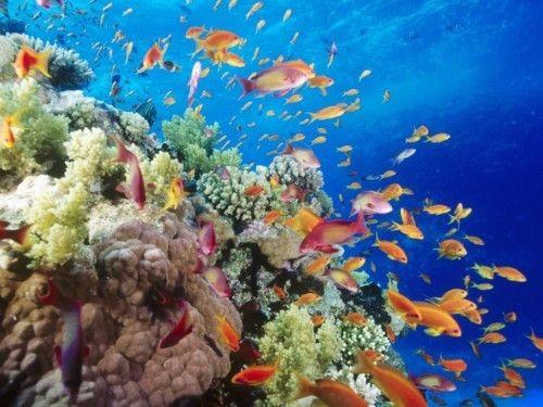 Fotos subacuáticas