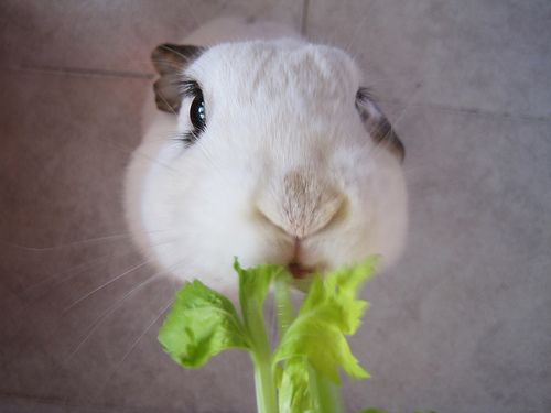 Bunny Adorableness. Look at those eyelashes.