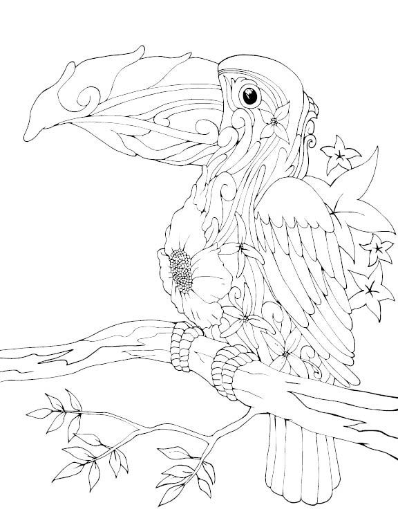 Animal Drawings I Did For Lampara Books Coloring Book Pencil