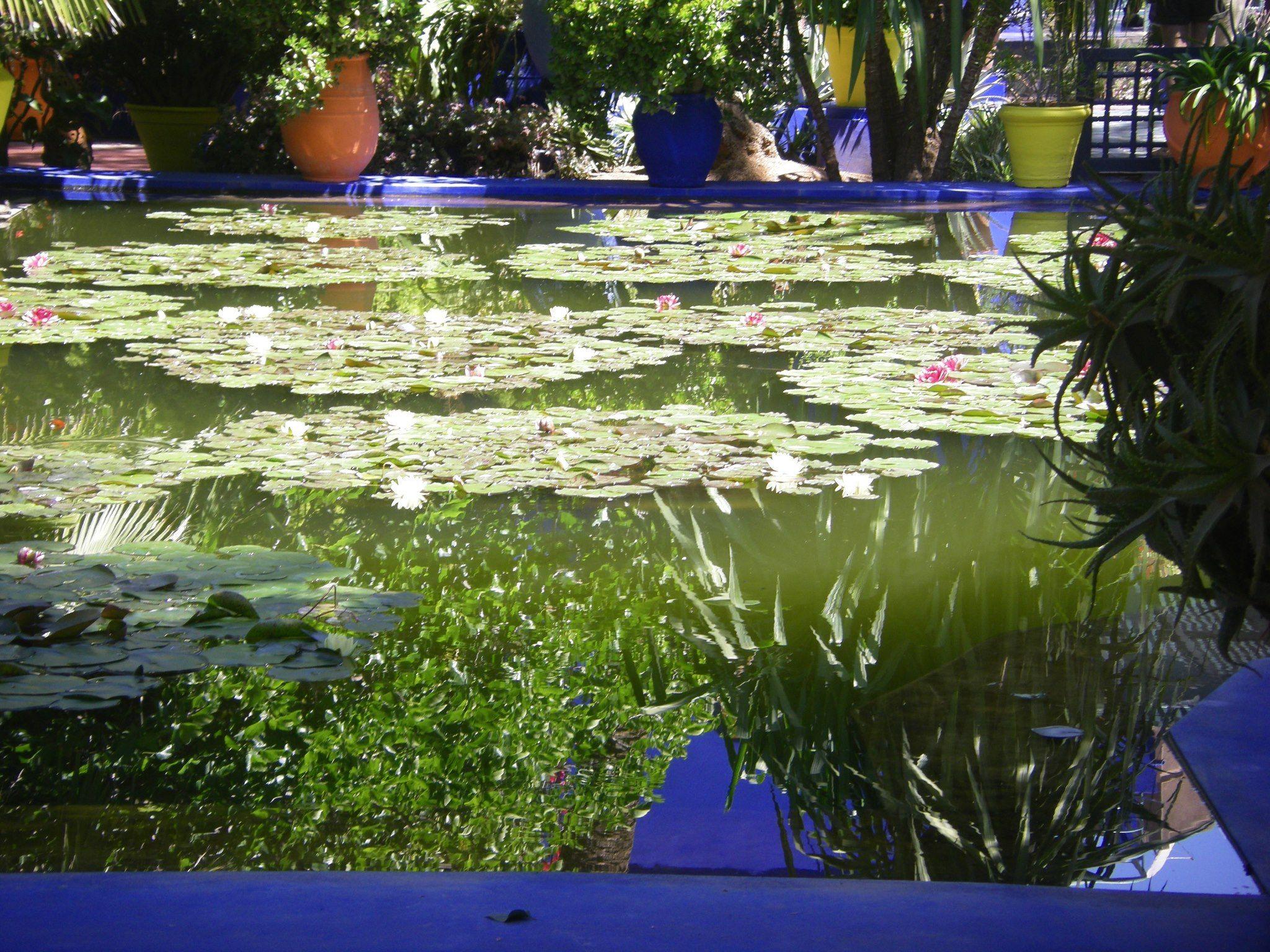 Beautiful jardin de Majorelle