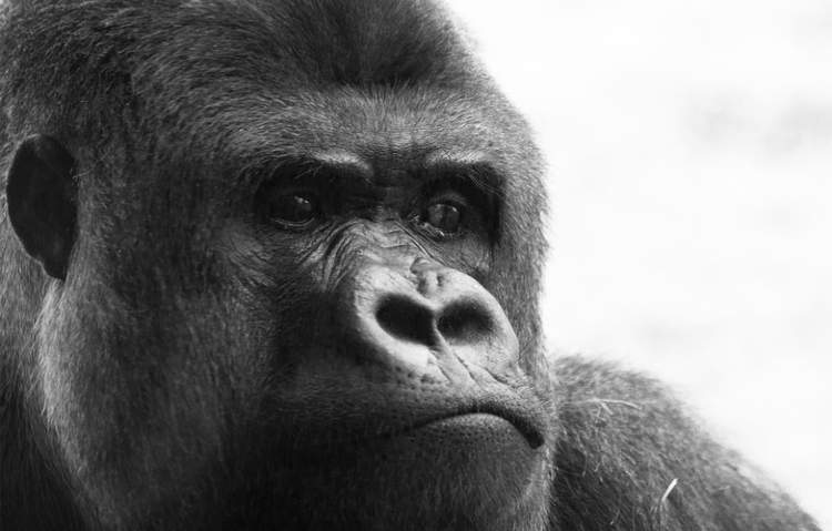 4 Very Real, Scientific Reasons to Fear the Rise of the Apes ...