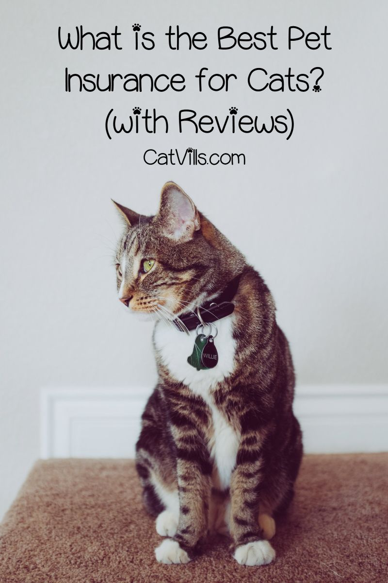What Is The Best Pet Insurance For Cats Extensive Review Guide
