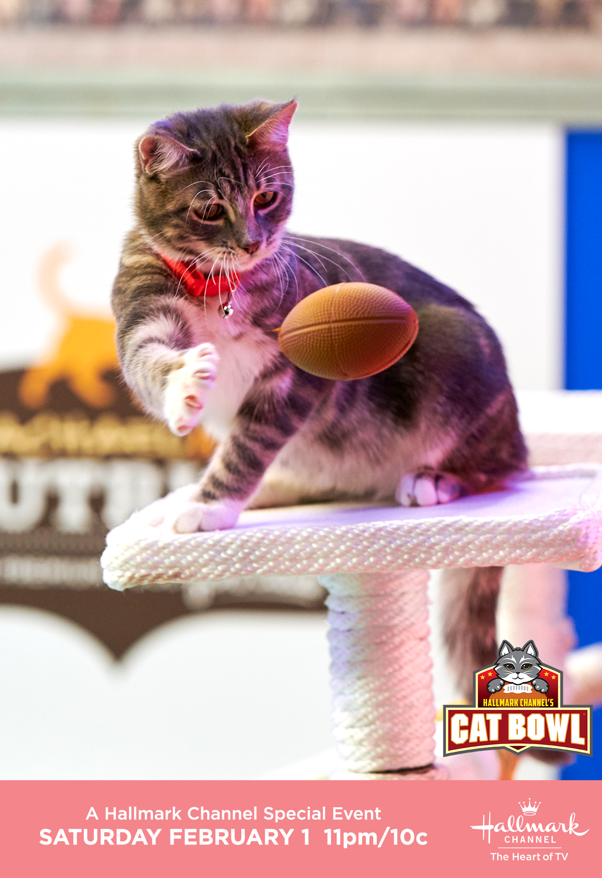 Hallmark Channel S Second Annual Cat Bowl Premieres On February 1 Kicking Off An Adoption Ever After Weekend Event Catbowl In 2020 Cat Bowls Cats Hallmark Channel