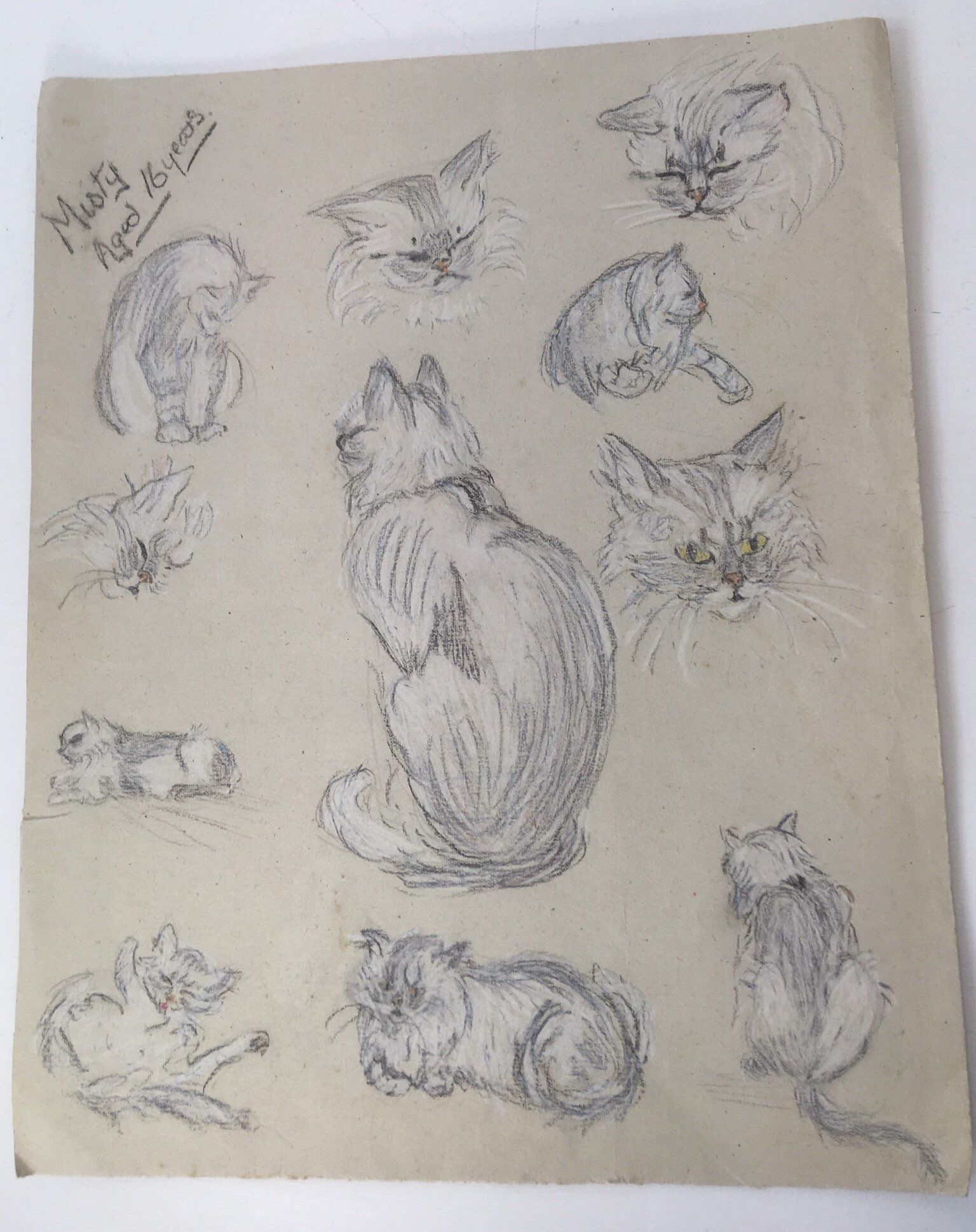 Vintage persian cat pencil drawing 1920s in 2019 138 antiques