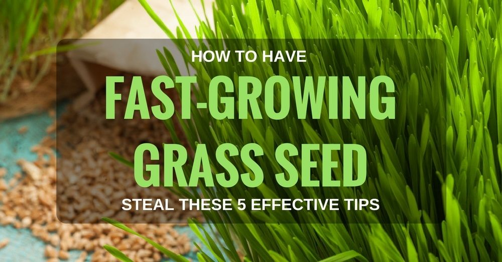 How To Have Fast Growing Grass Seed Steal These 5 Effective Tips