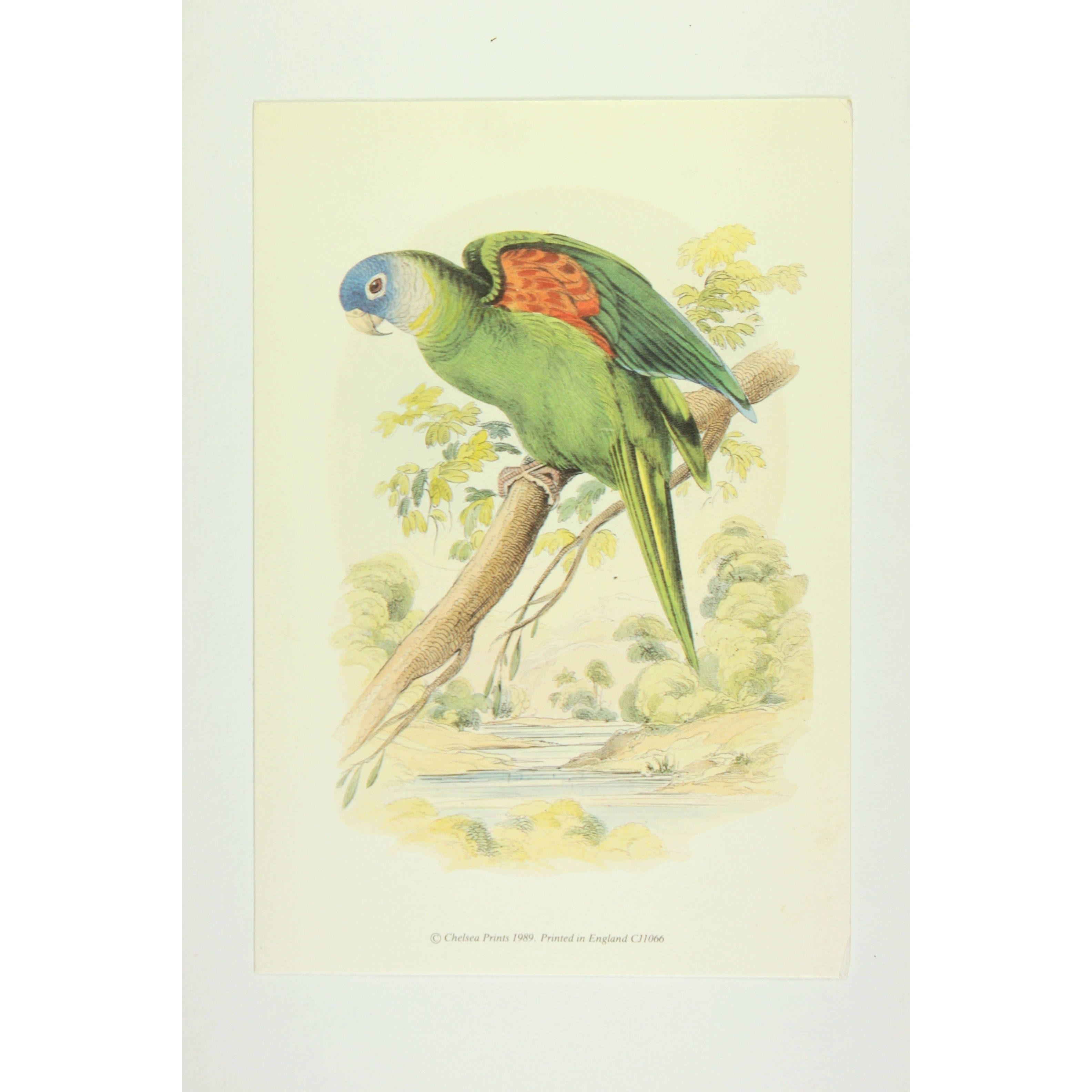The Head Parrot premium Art Print of Birds by Edward Donovan ...