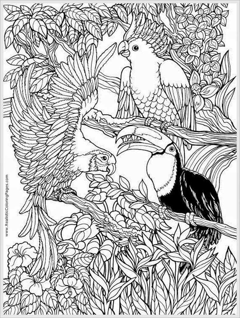 coloring pages for adults to print and color free | parrots bird ... - Tropical Coloring Pages Print