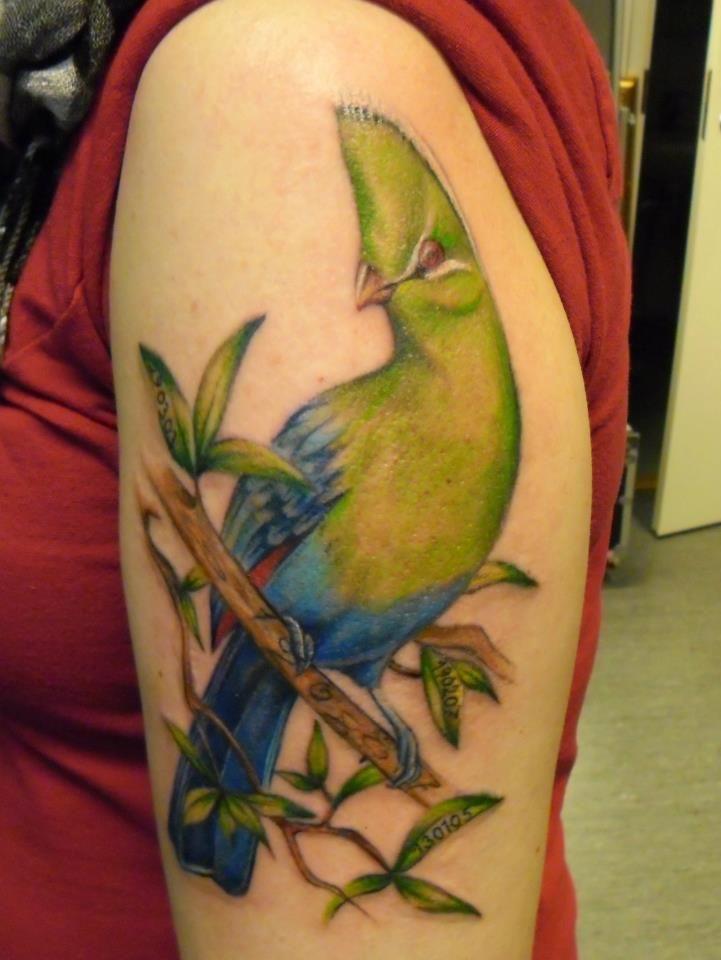 Lintu Tatuointi