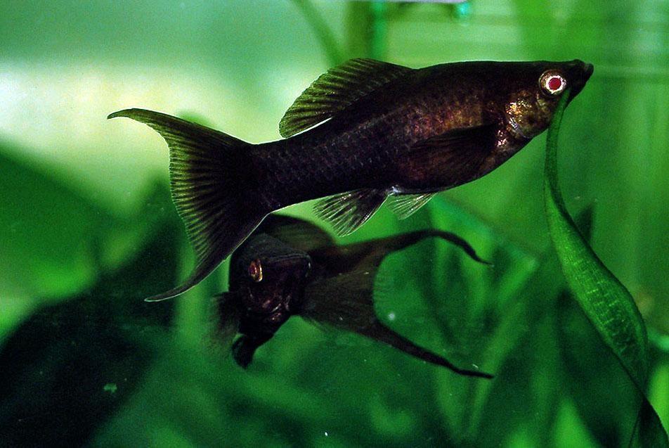 Aquarium Fish Aquarium Fish Free Wallpaper In Free Pet