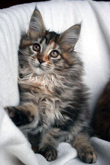 Pin On Kitty Wampus