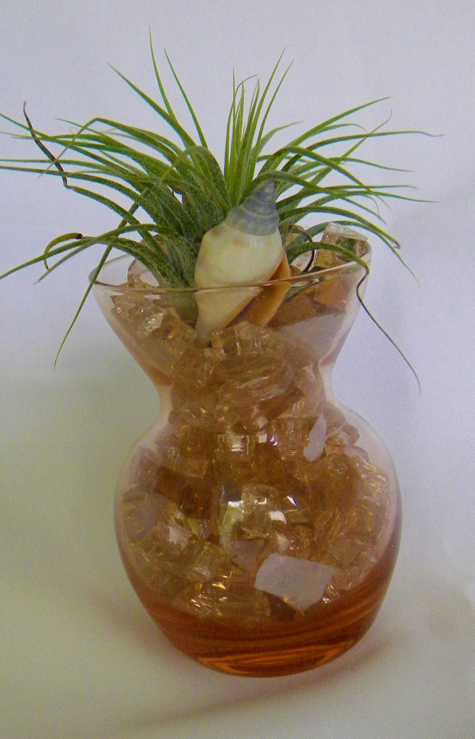 glass vase with air plant and reflective fire glass accent air