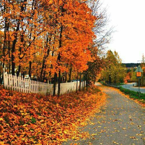 Pin by Nora Gholson on legends of the fall... Autumn