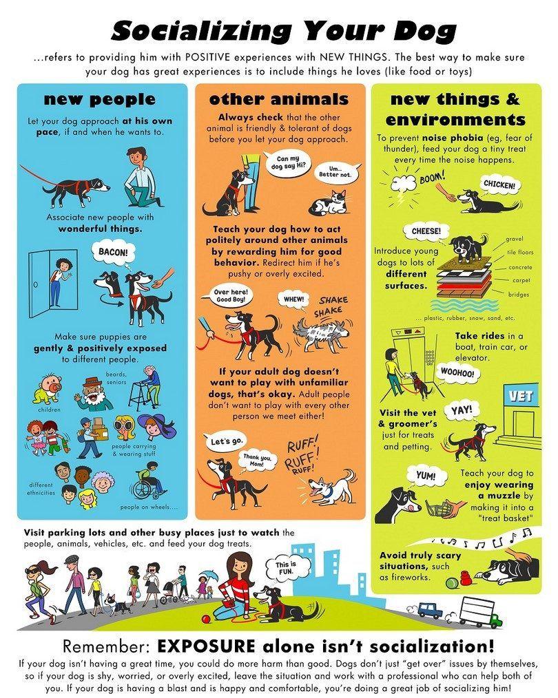 Socializing your dog infographic