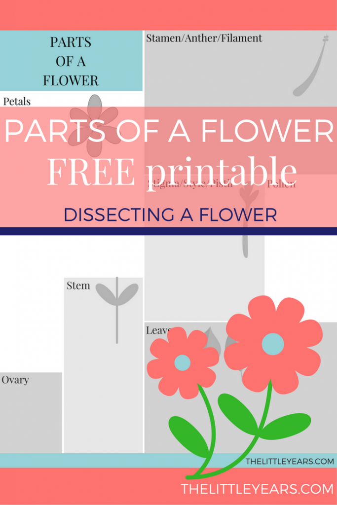 Dissecting Flowers For Kids Free