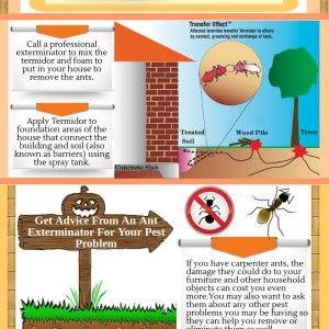 How To Get Rid Of Carpenter Ants Pest Control Carpenter Ant Flea Prevention