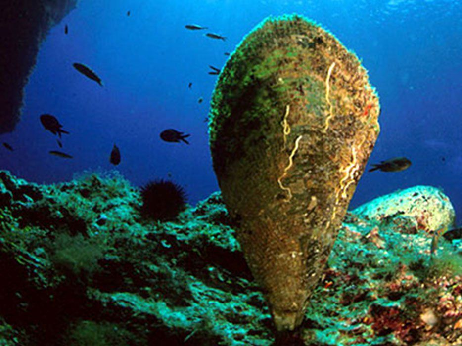 One Person Left On Earth Knows The Ancient Secret Of Producing Sea Silk Sea Silk Sea Fauna