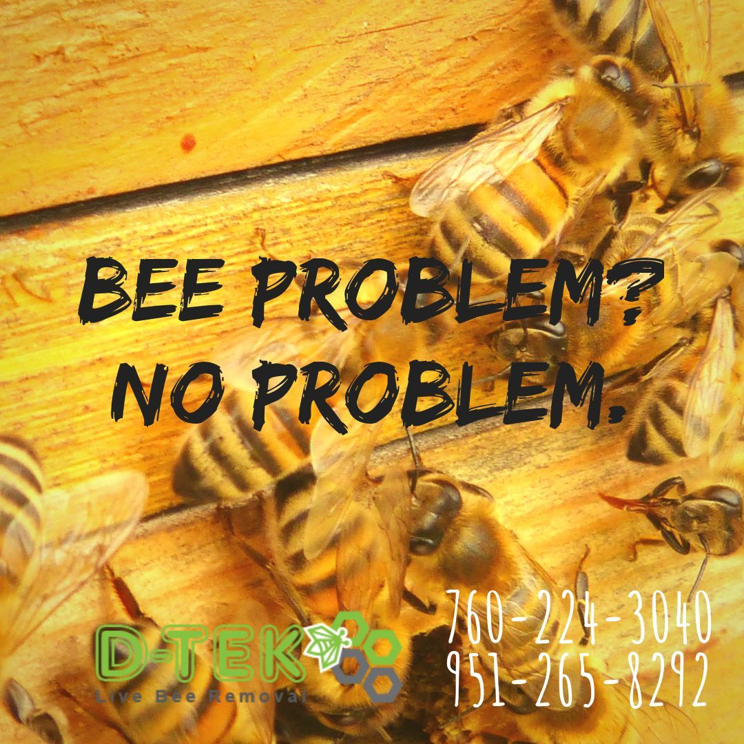 If You Ve Got A Bee Problem It S No Problem Beeremoval Waspremoval Livebeeremoval Beecontrol Sandiego Beekeeping Beekeep Bee Removal Bee Problem Bee