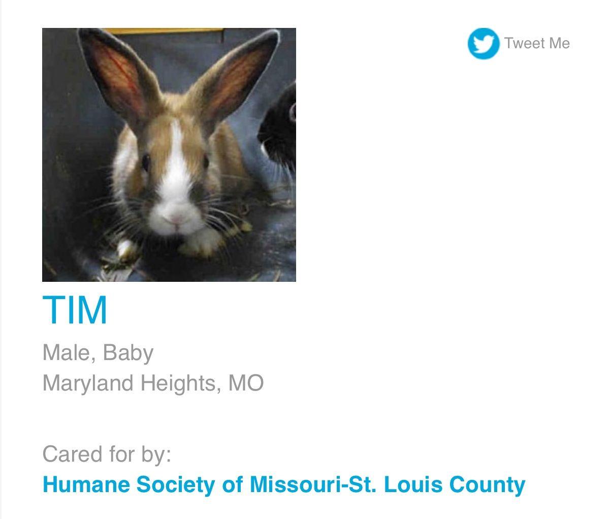 Pin By Tan2914 On Adopt Don T Shop Humane Society Animals Adoption