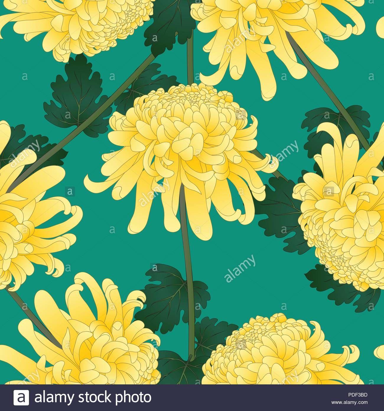 Download This Stock Vector Yellow Chrysanthemum Kiku Japanese Flower On Green Teal Background Vector Japanese Flowers Yellow Chrysanthemum Flower Wallpaper