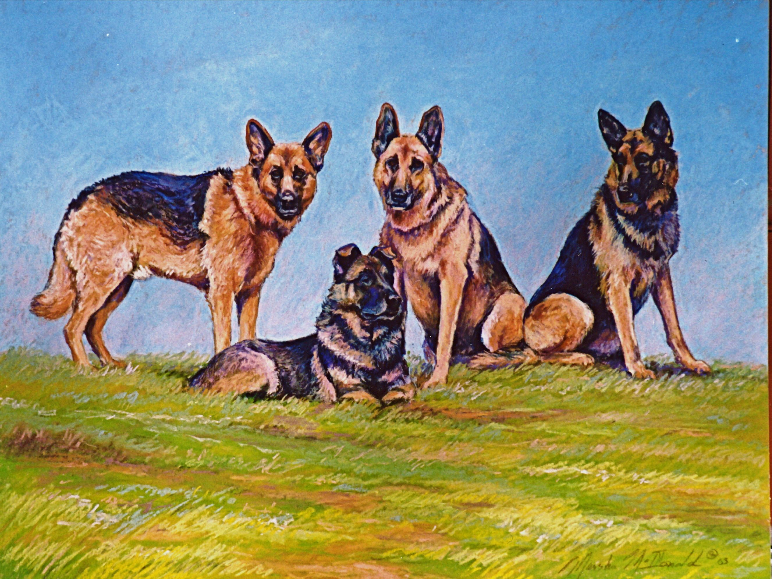 The Gang At Canine Fitness Camp. German Shepherd Dogs
