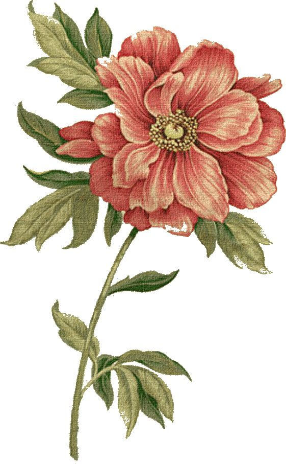 赤い花のイラスト-リアルテイスト