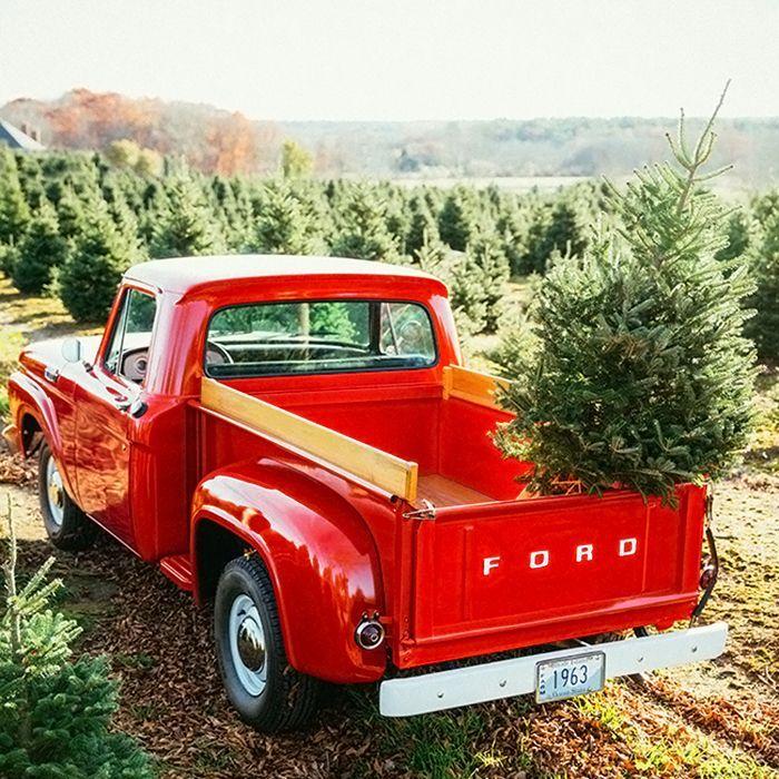 7 Tips to Keep Your Live Christmas Tree Fresh | Live ...