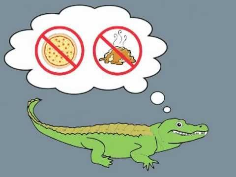 Number Eating Alligator Song---how cute for greater than and less than!!