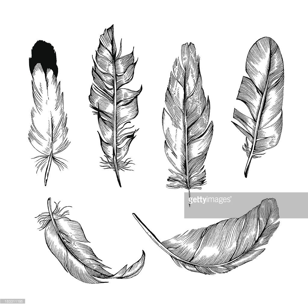 Vector Detailed Hand-Drawn Illustrations of Feathers in Black&White style. Each of the Feathers is isolated object (eps 8).