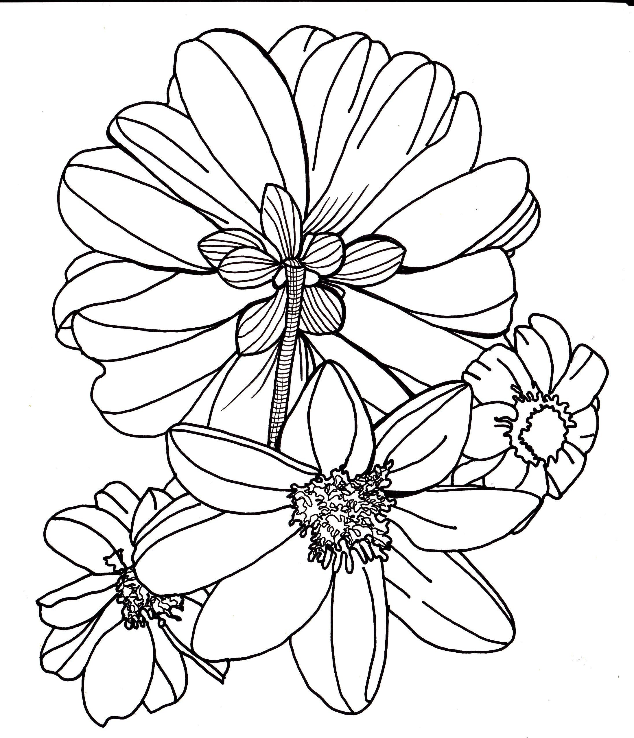 Drawn elower one flower - Pencil and in color drawn elower ...