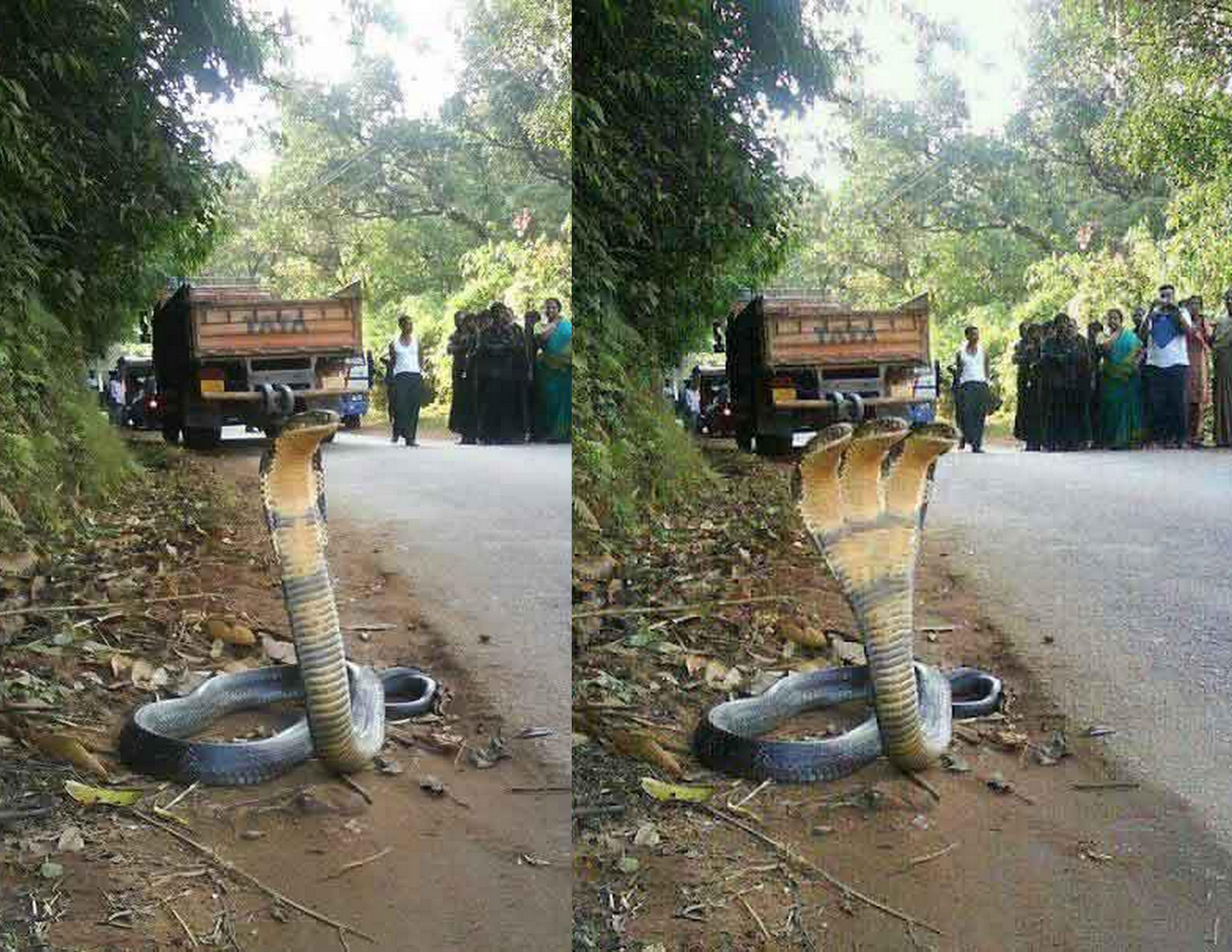 real monster snake wwwimgkidcom the image kid has it