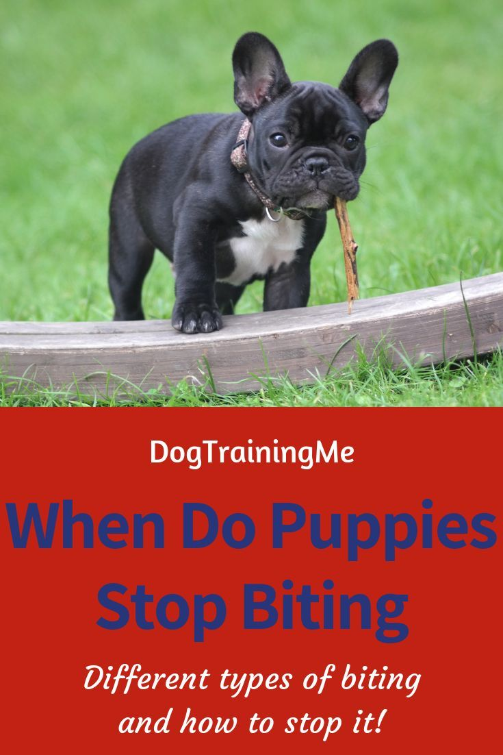 When Do Puppies Stop Biting So Much We Take A Look At Why Puppies