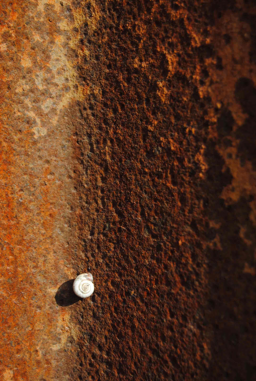 """""""snail on the wall"""", Rheinpark, Duisburg – Octubre 2013 – Precio: 250 EUR"""