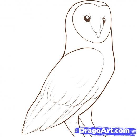 How To Draw A Barn Owl Step By Step Drawing Guide By Darkonator Owl Drawing Simple Owls Drawing Bird Drawings