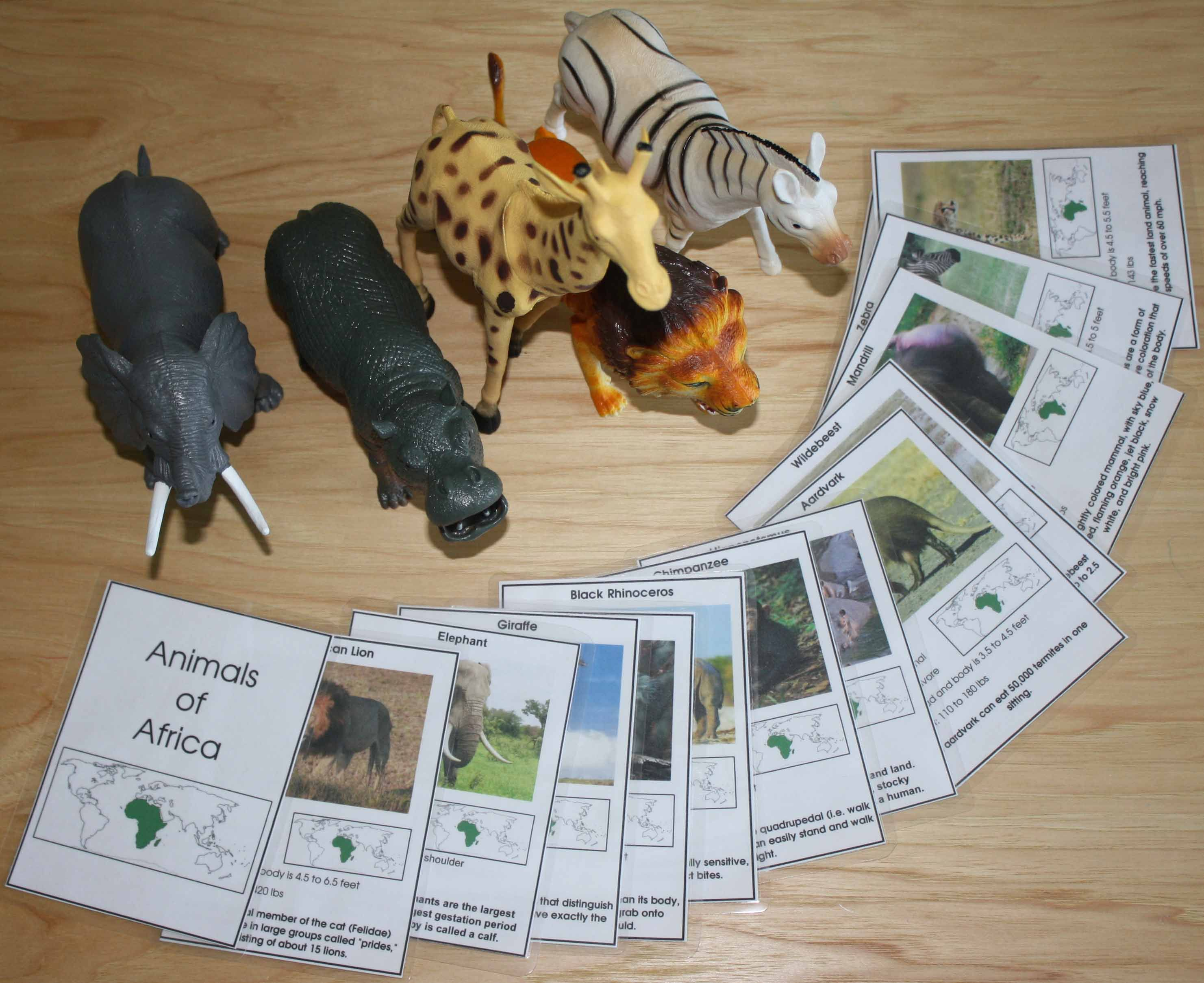 Montessori Inspired Zoo Animal Unit