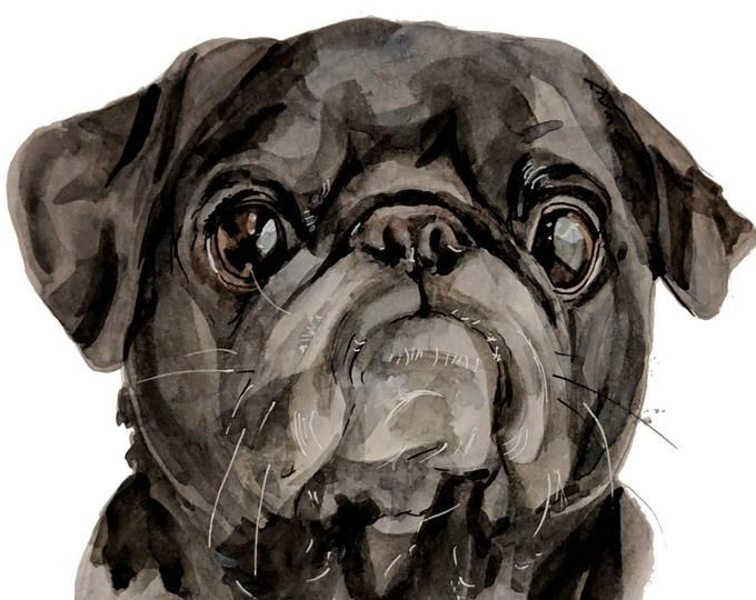 Custom Pet Portraits Watercolor Cat And By Artishokpetportraits Pet Portraits Custom Dog Portraits Custom Pet Portraits