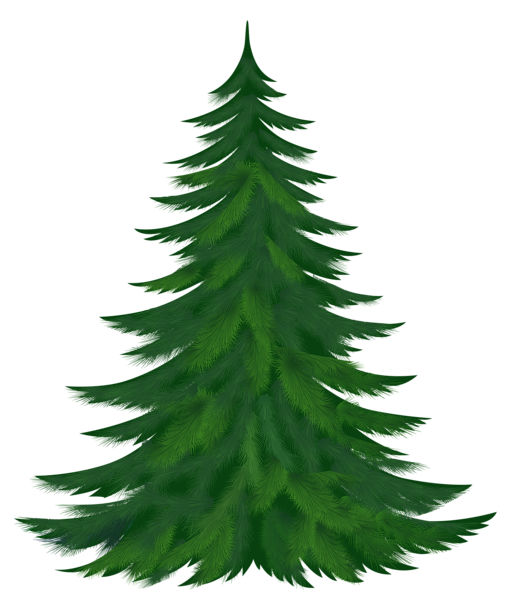 transparent pine tree png picture pinterest rh pinterest com clip art pine trees with snow clip art pine tree